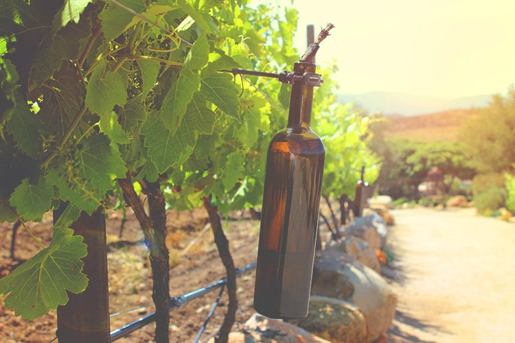 History of Winemaking in Valle de Guadalupe